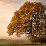 autumn-1620929__180